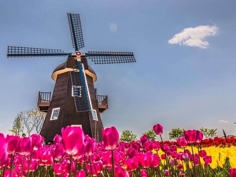 1° Maggio Amsterdam e tulipani da Verona